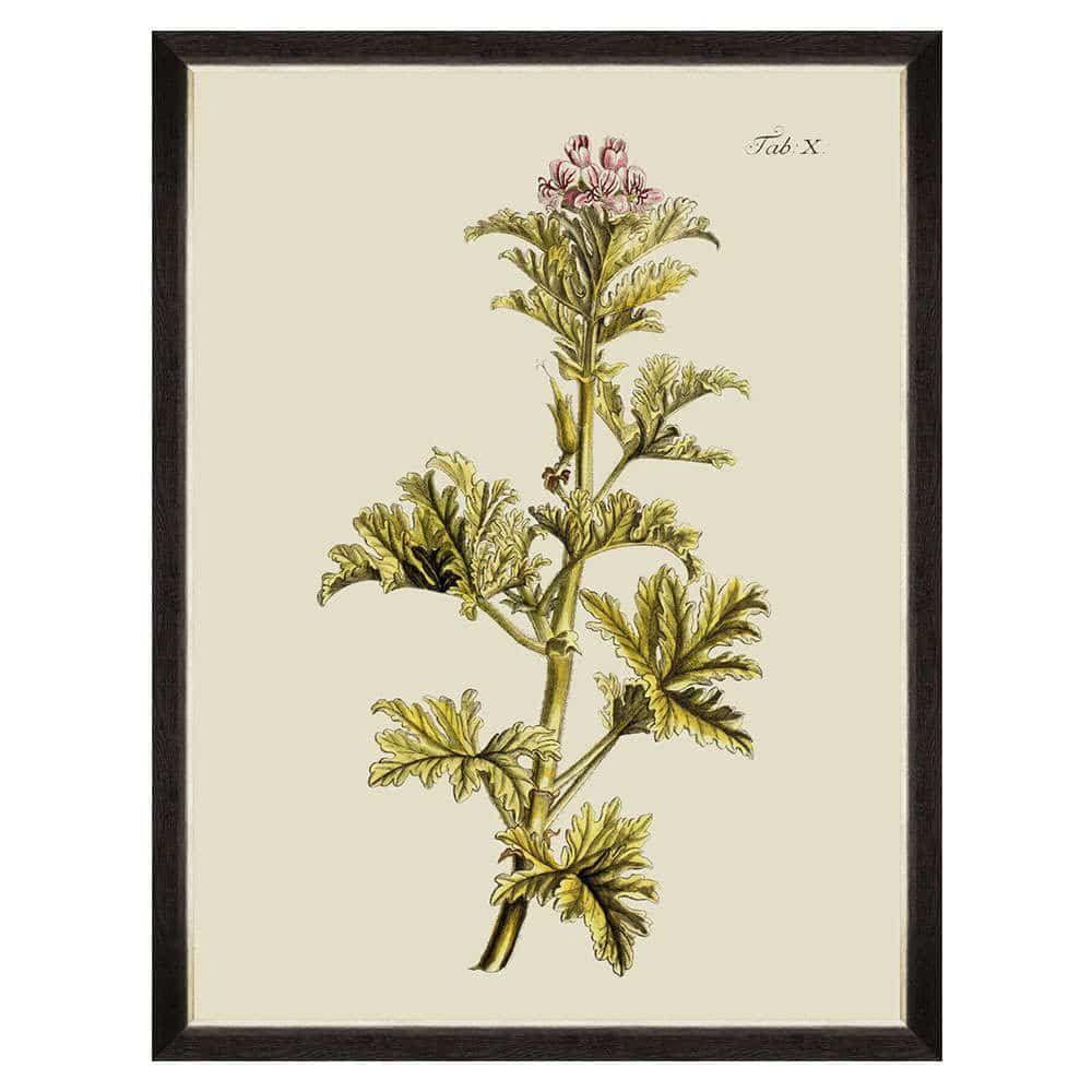 Κάδρο Botanical II FA13225 60x80cm Green MindTheGap
