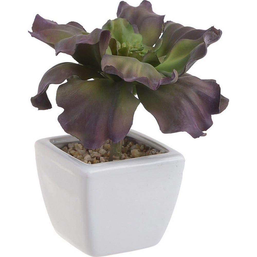 Διακοσμητικό Φυτό Σε Γλάστρα 3-85-084-0043 Green-Purple 7Χ7Χ16 Inart